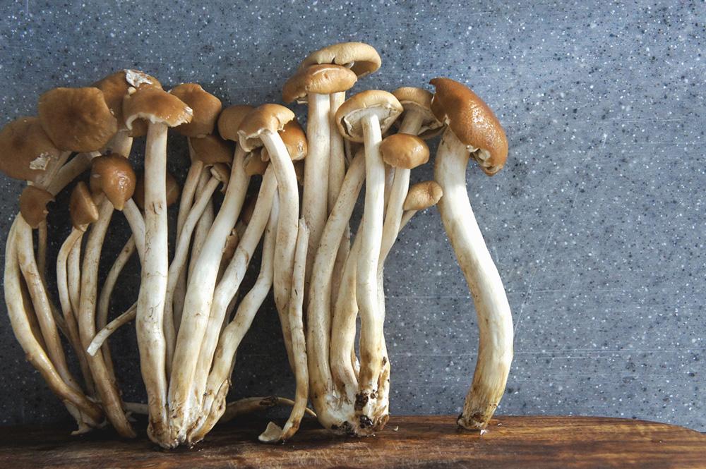tofu-mushroom-salad