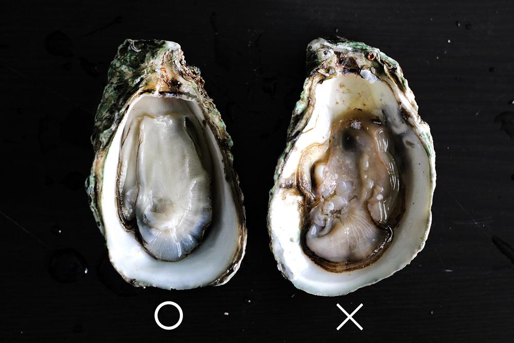 shuck-oyster10