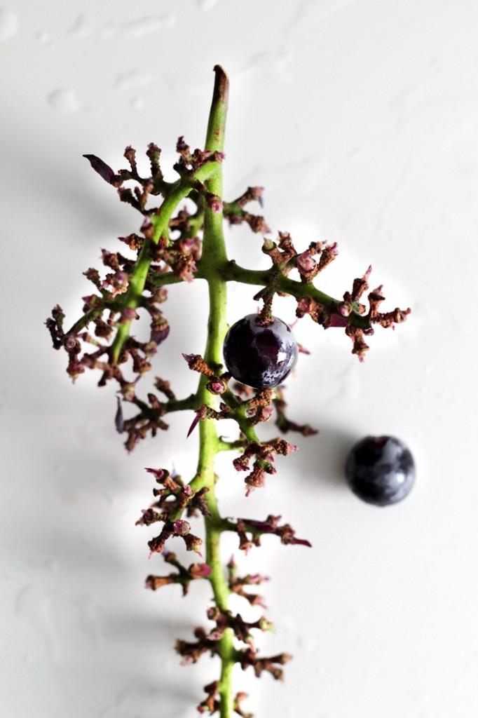 grape-daiquiri31