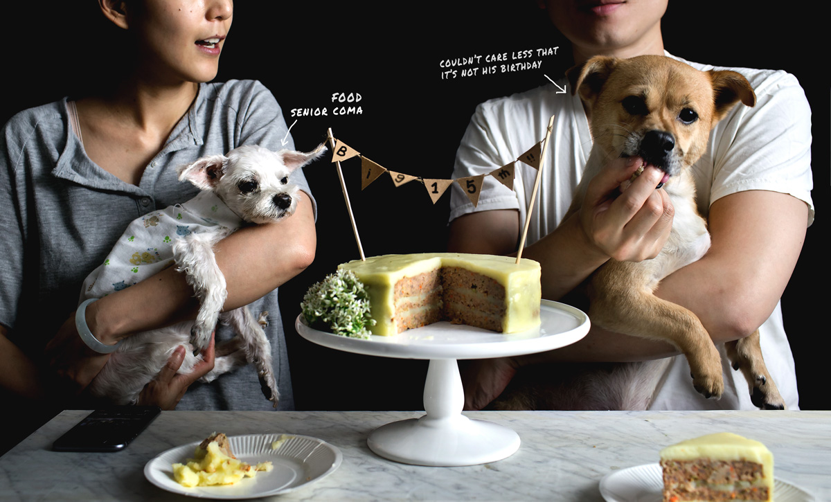 Birthday Cake For Dogs Meat ~ Lovefoodibiza couscous carrot birthday cake for dogs